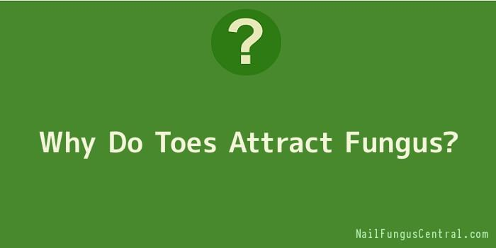Why Do Toes Attract Fungus